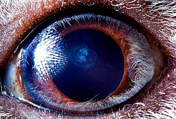 Глаза животных - уникальная макросьемка фотографа Сурена Манвеляна