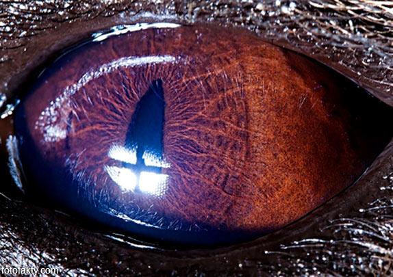 Глаз гиены
