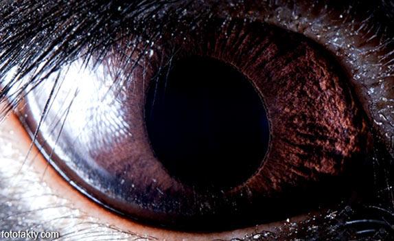 Глаз черного кролика