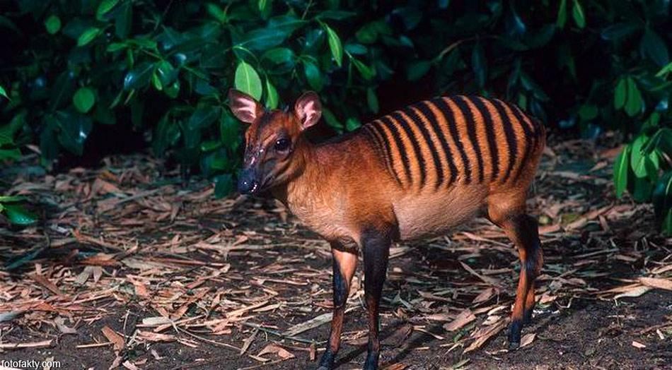 экзотических животных с названиями