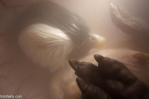 Зародыши животных в утробе матери Фото 4