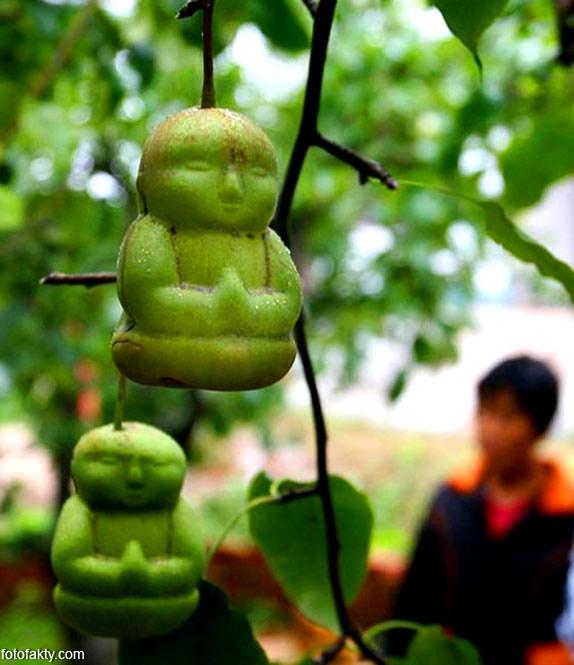Странные груши в форме Будды Фото 2