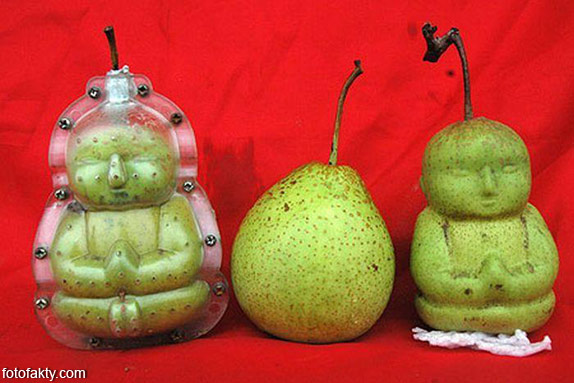 Странные груши в форме Будды Фото 8