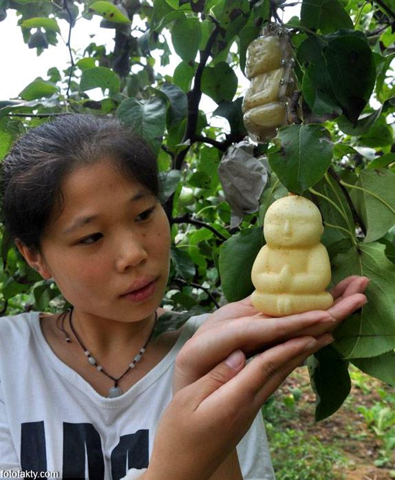 Странные груши в форме Будды Фото 7