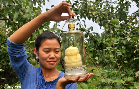 Странные груши в форме Будды Фото 10