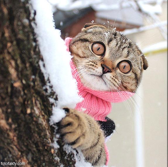 Эти удивительные кошки Фото 1