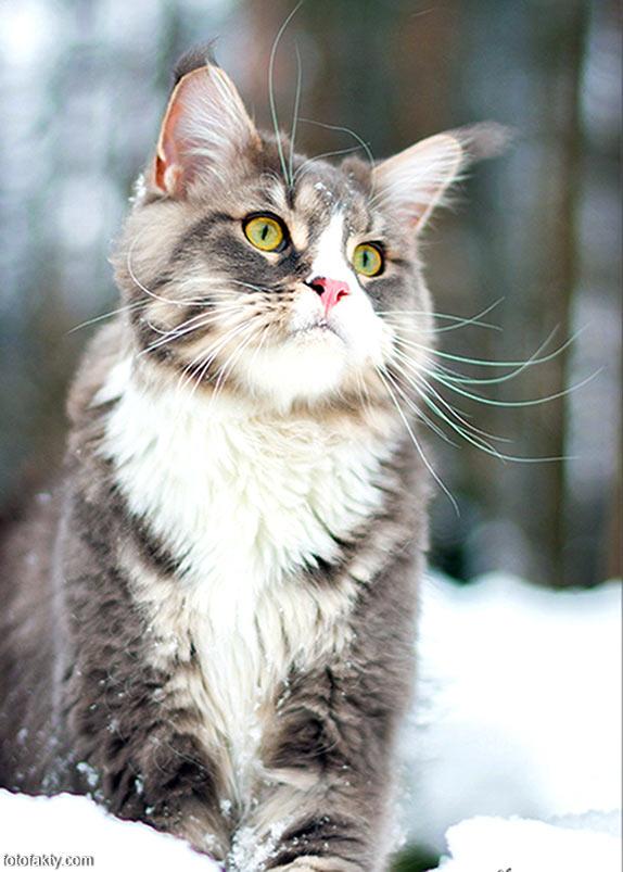 Эти удивительные кошки Фото 3