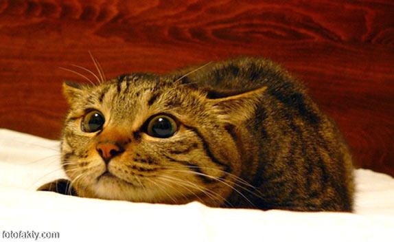 Эти удивительные кошки Фото 6