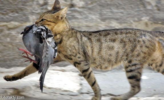 Эти удивительные кошки Фото 9