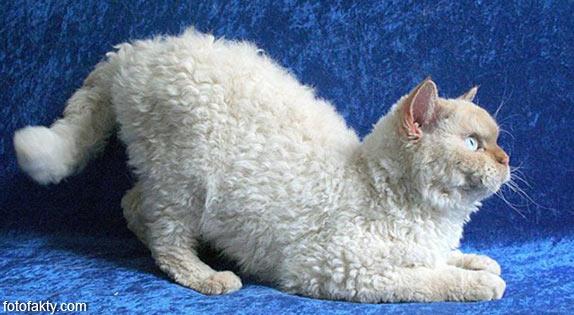 Эти удивительные кошки Фото 13