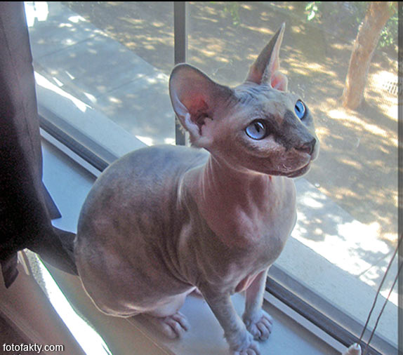 Эти удивительные кошки Фото 8
