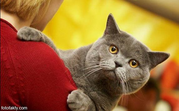 Эти удивительные кошки Фото 5