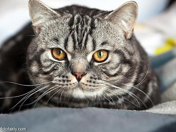 Эти удивительные кошки Фото 11