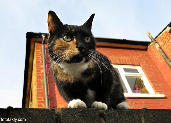 Эти удивительные кошки Фото 7