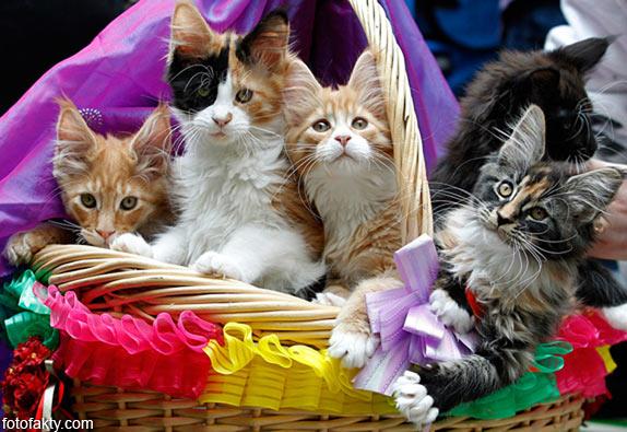 Эти удивительные кошки Фото 2