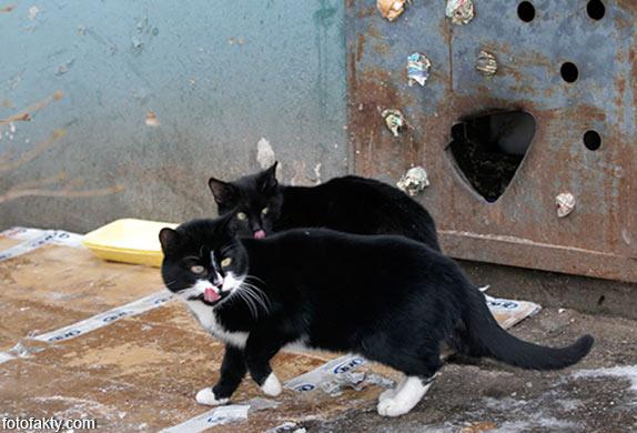 Эти удивительные кошки Фото 12