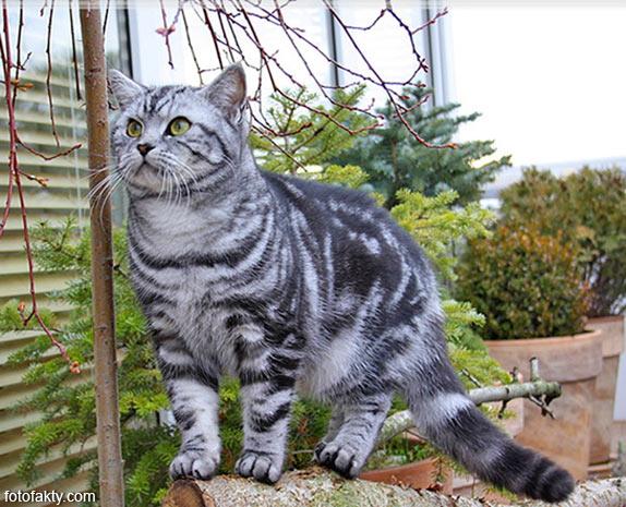 Эти удивительные кошки Фото 14