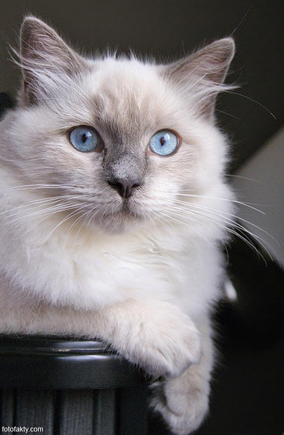 Эти удивительные кошки Фото 10