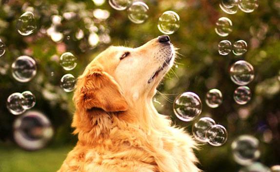 Champ - самая счастливая собака в мире