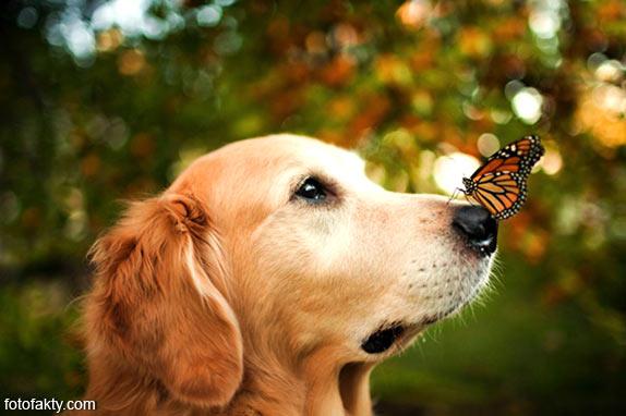Cамая счастливая собака в мире Фото 1