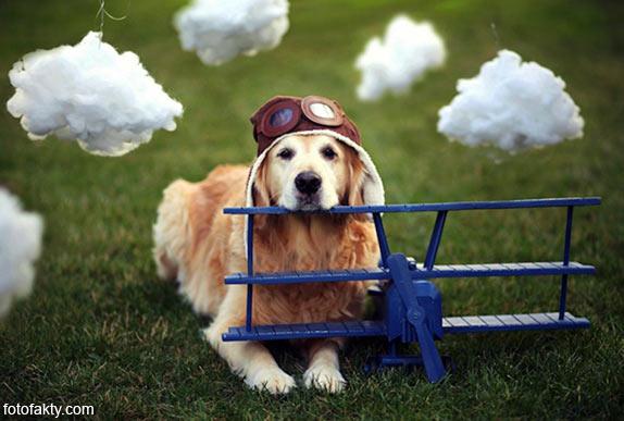 Cамая счастливая собака в мире Фото 2