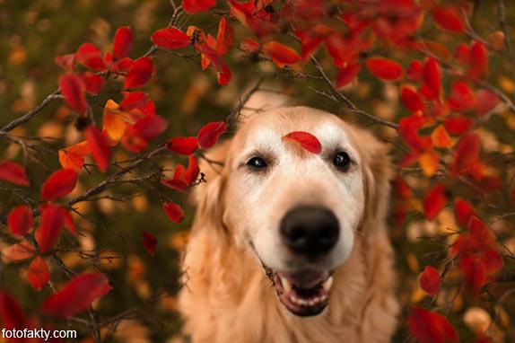 Cамая счастливая собака в мире Фото 3