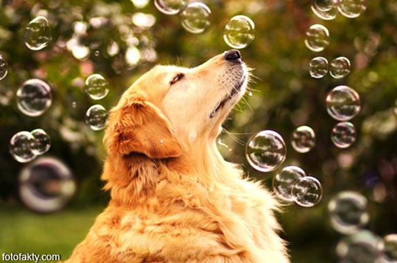 Cамая счастливая собака в мире Фото 4