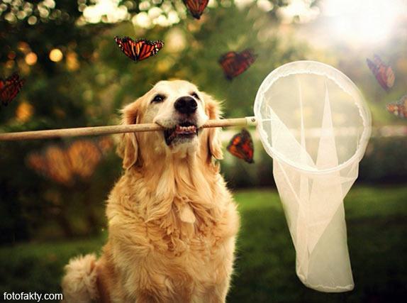 Cамая счастливая собака в мире Фото 5