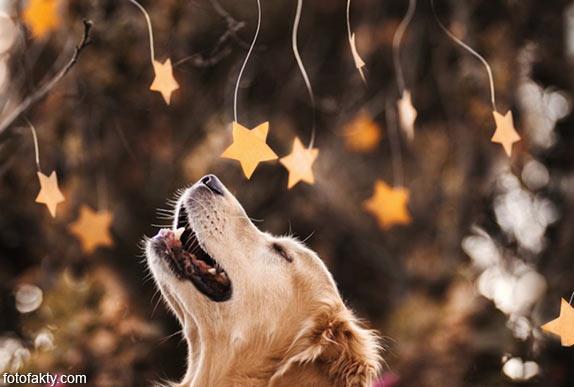 Cамая счастливая собака в мире Фото 6
