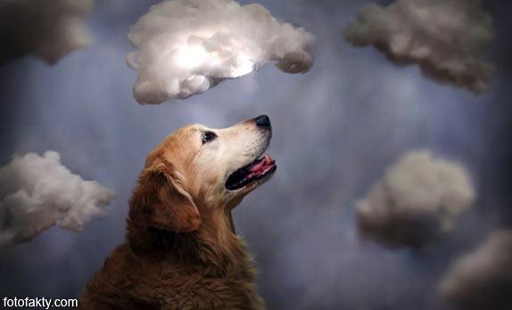 Cамая счастливая собака в мире Фото 7