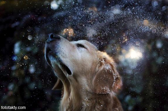 Cамая счастливая собака в мире Фото 9
