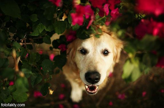 Cамая счастливая собака в мире Фото 10