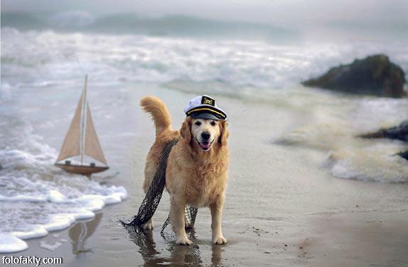 Cамая счастливая собака в мире Фото 11