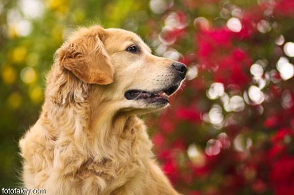 Cамая счастливая собака в мире Фото 12