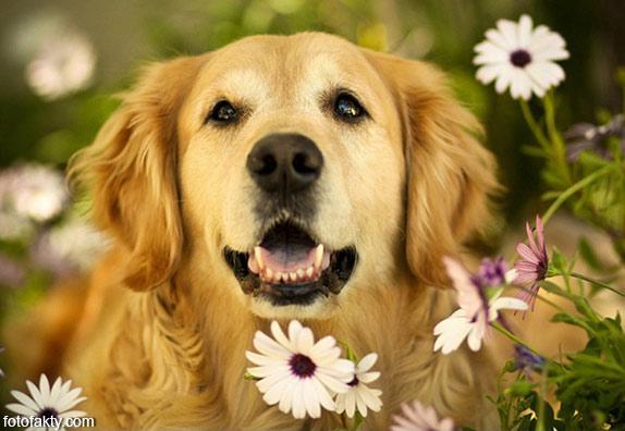 Cамая счастливая собака в мире Фото 13