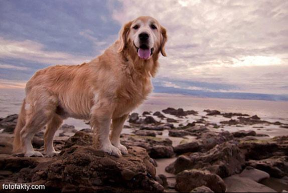 Cамая счастливая собака в мире Фото 14