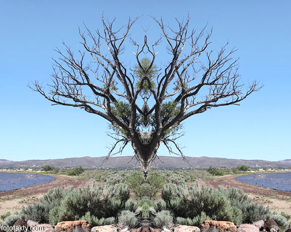 В поисках симетрии в природе Фото 1