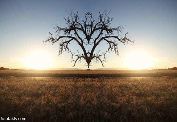 В поисках симетрии в природе Фото 2
