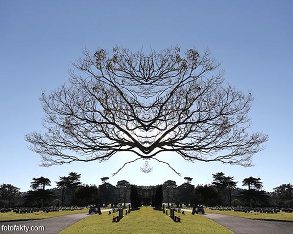 В поисках симетрии в природе Фото 3