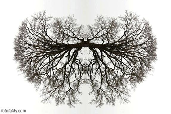 В поисках симетрии в природе Фото 4