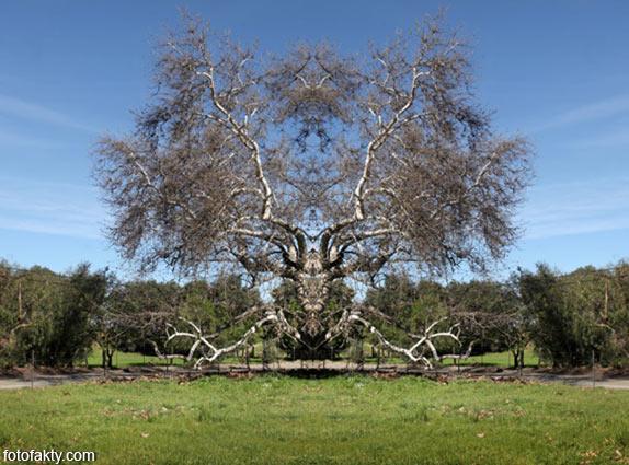 В поисках симетрии в природе Фото 5