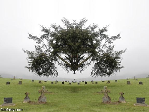 В поисках симетрии в природе Фото 6