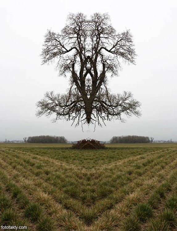 В поисках симетрии в природе Фото 8