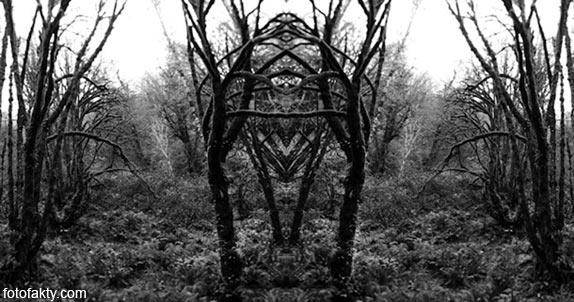 В поисках симетрии в природе Фото 9