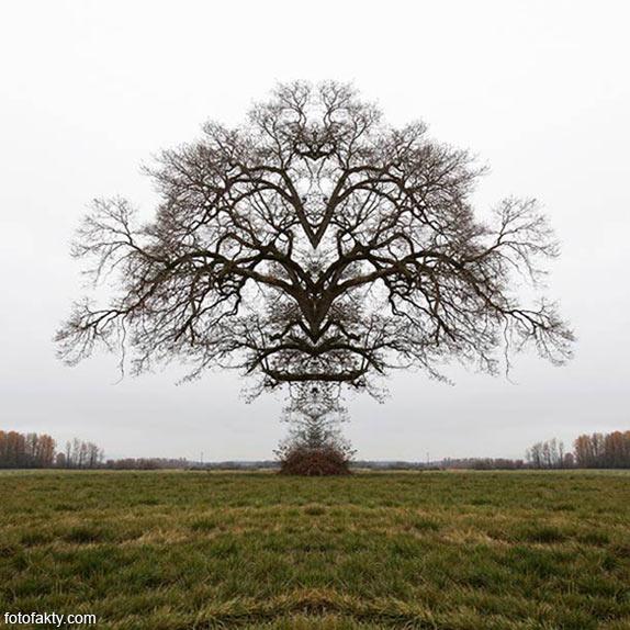 В поисках симетрии в природе Фото 10