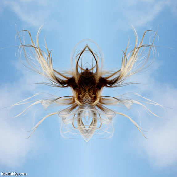 В поисках симетрии в природе Фото 13
