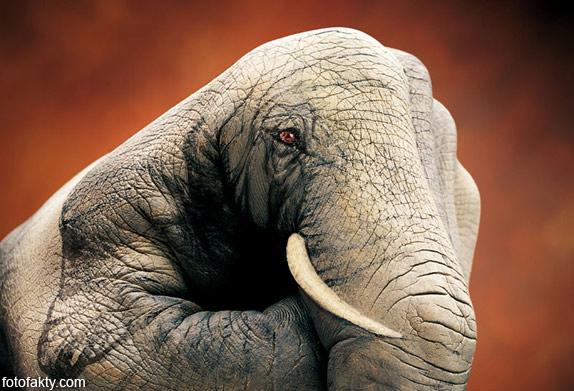 Невероятный боди-арт Гвидо Даниэле Фото 2