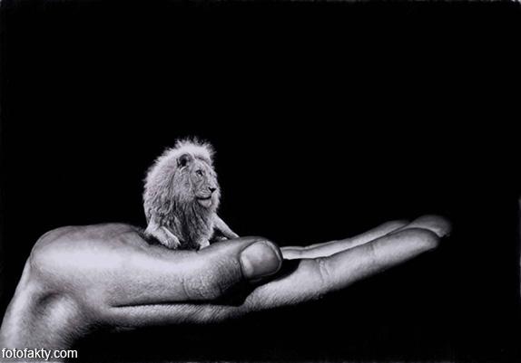 Джоно Драй и его фотореалистичные рисунки карандашом Фото 1