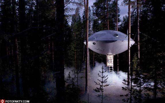 Отель на дереве фото 2