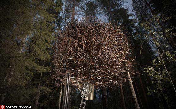 Отель на дереве фото 7